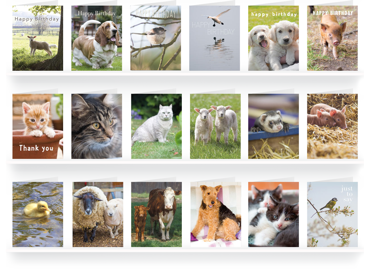 small-photographic-animal-cards
